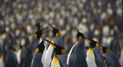 Family Day | Penguins, Puffins, And Polar Bears! image
