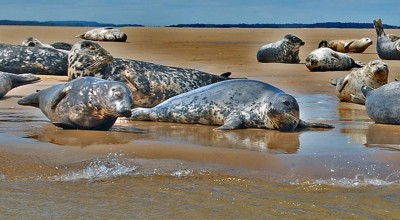 Songs of Seals and Seabirds image