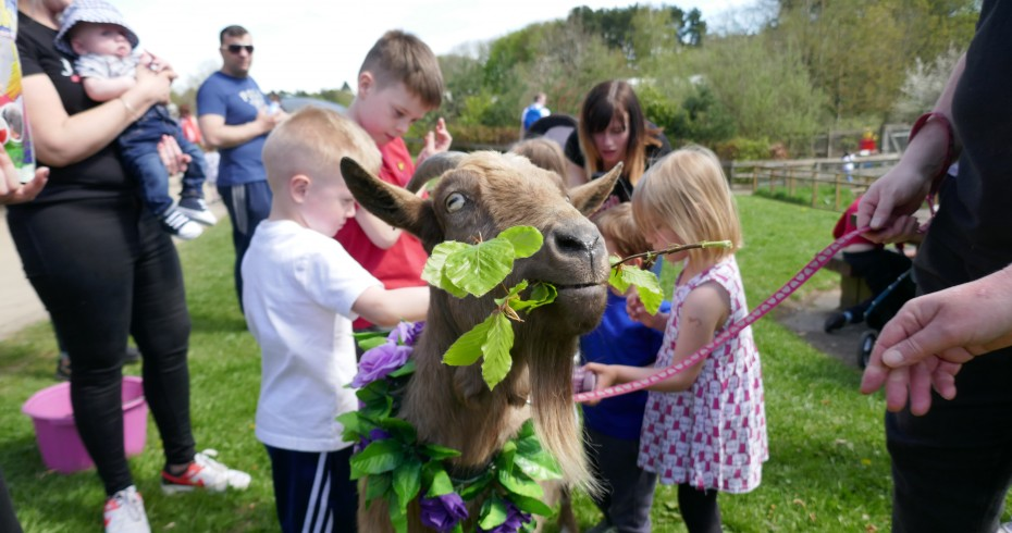 photo pf a goat eat a sprig, wearing a garland, with children in background
