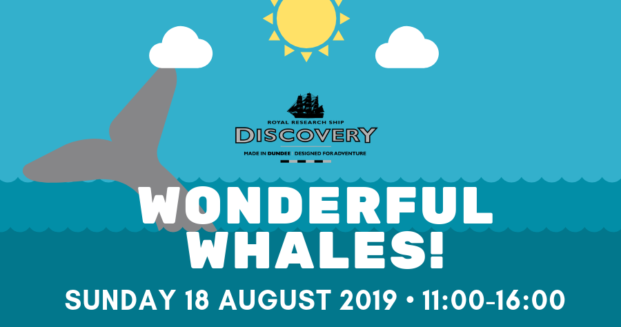 wonderful whales banner image