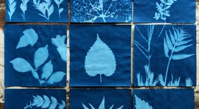 Summer Family Fun: Cyanotype Photography image