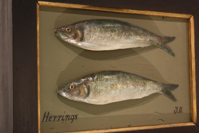 Fish cast of herrings image