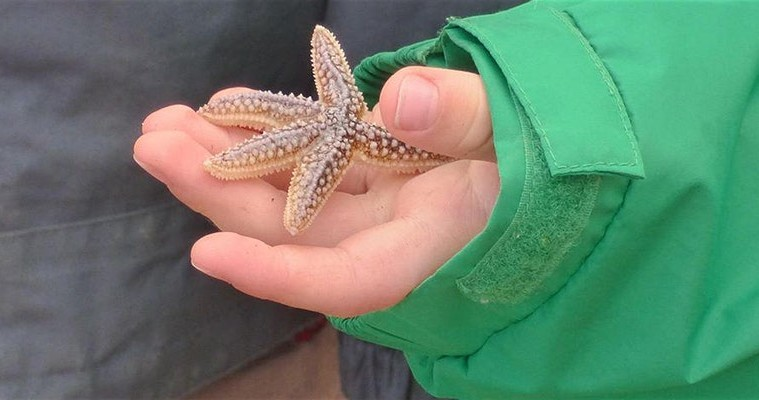 child's hand holding a small starfish