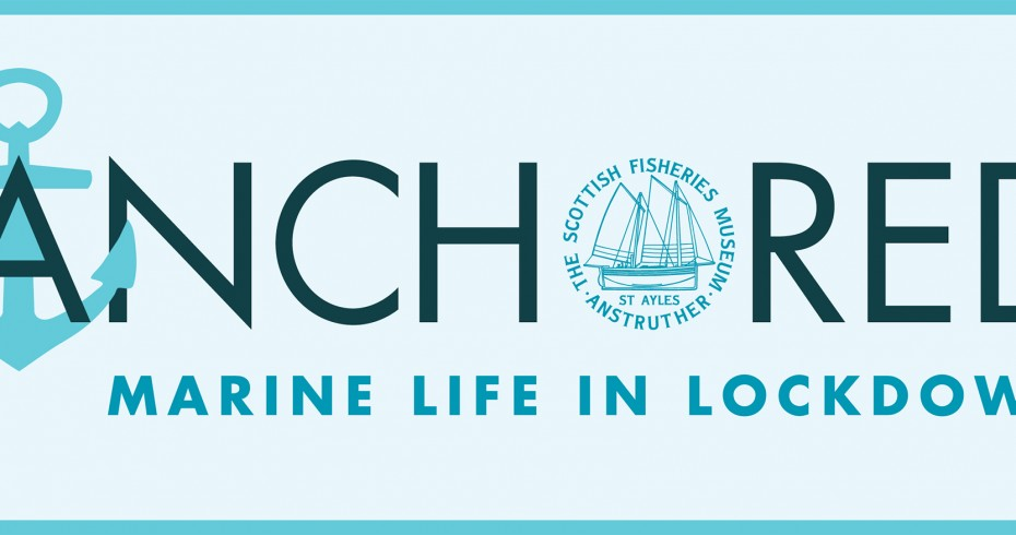 anchored project logo, marine life in lockdown