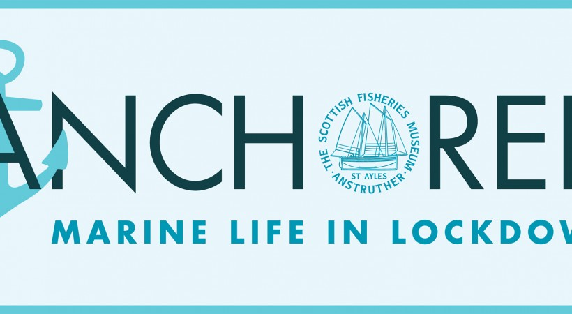 The Scottish Fisheries Museum presents: Anchored - Marine Life in Lockdown image