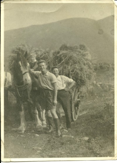 Photograph of hay harvest image